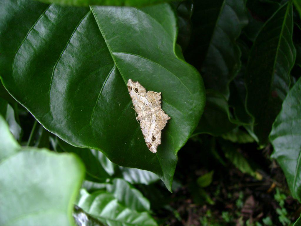 butterfly-31_3082760680_o
