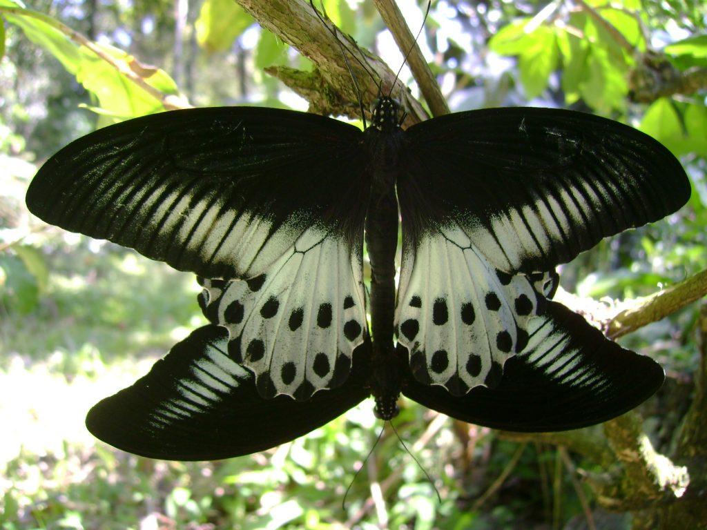 butterfly-33-slide-a_3085992728_o
