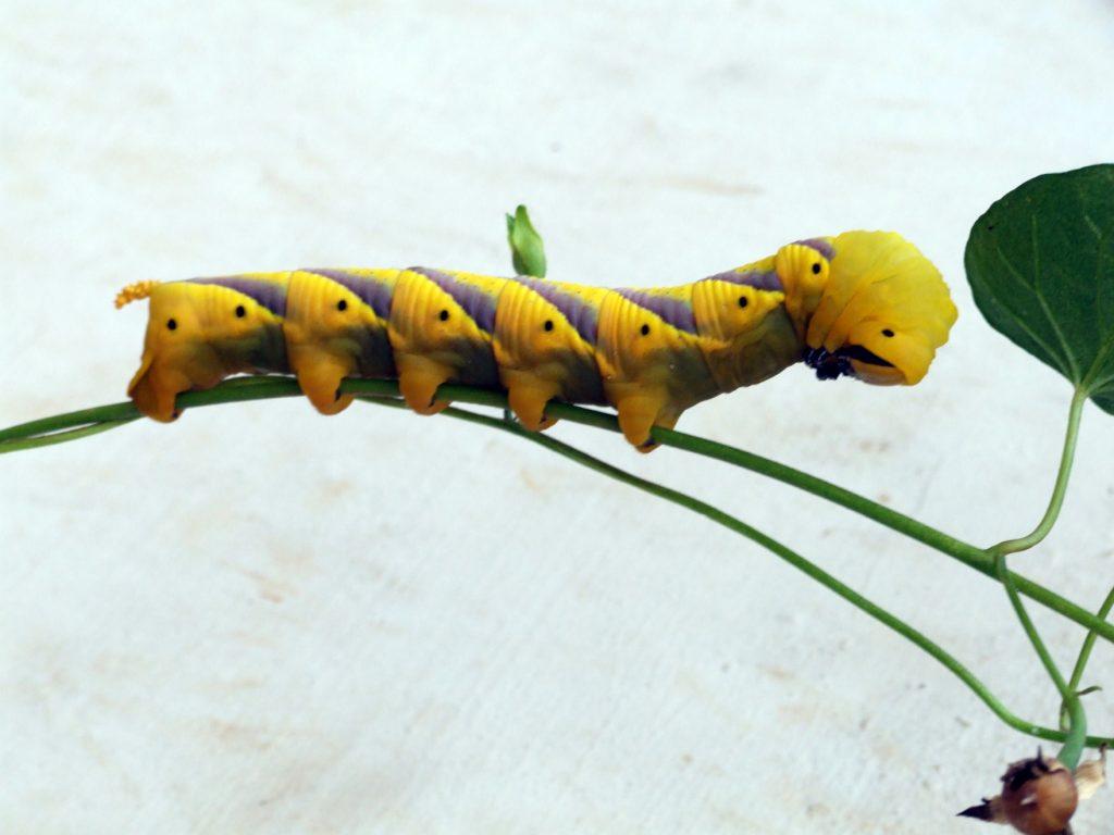 butterfly-33-slide-c-aps_3085992370_o