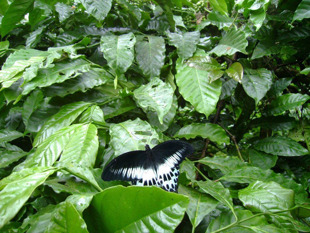 butterfly-33-slide-e_3085154161_o