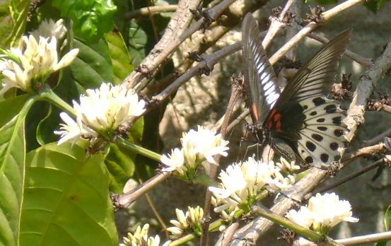butterfly-33_3082766010_o