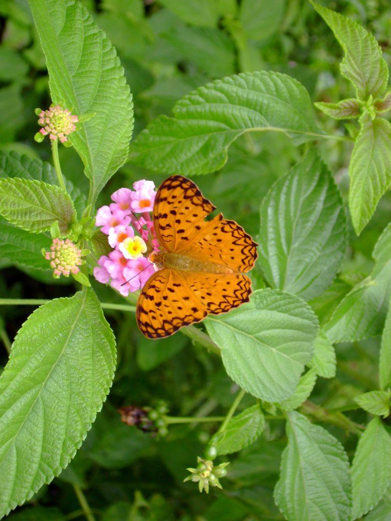 butterfly-34_3082758492_o