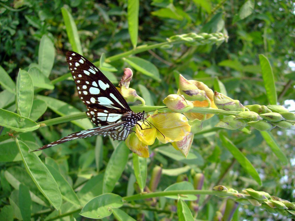 butterfly-37_3082762252_o