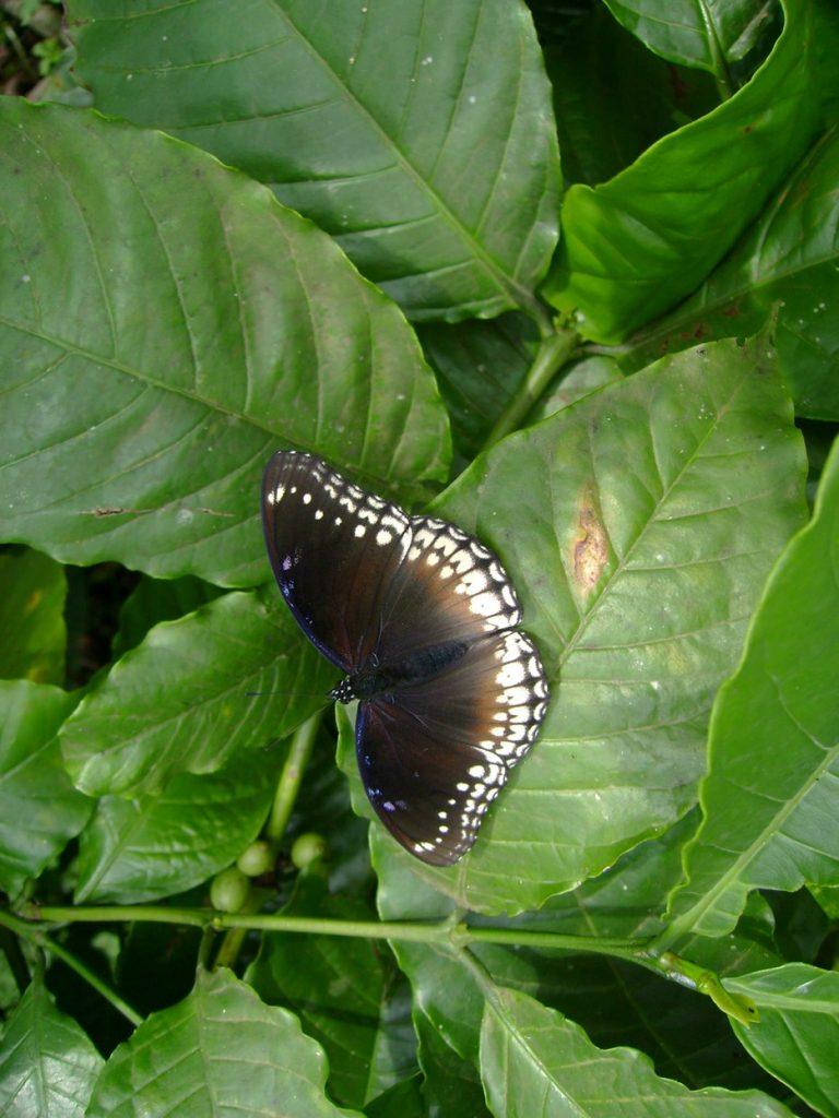 butterfly-38_3082764946_o