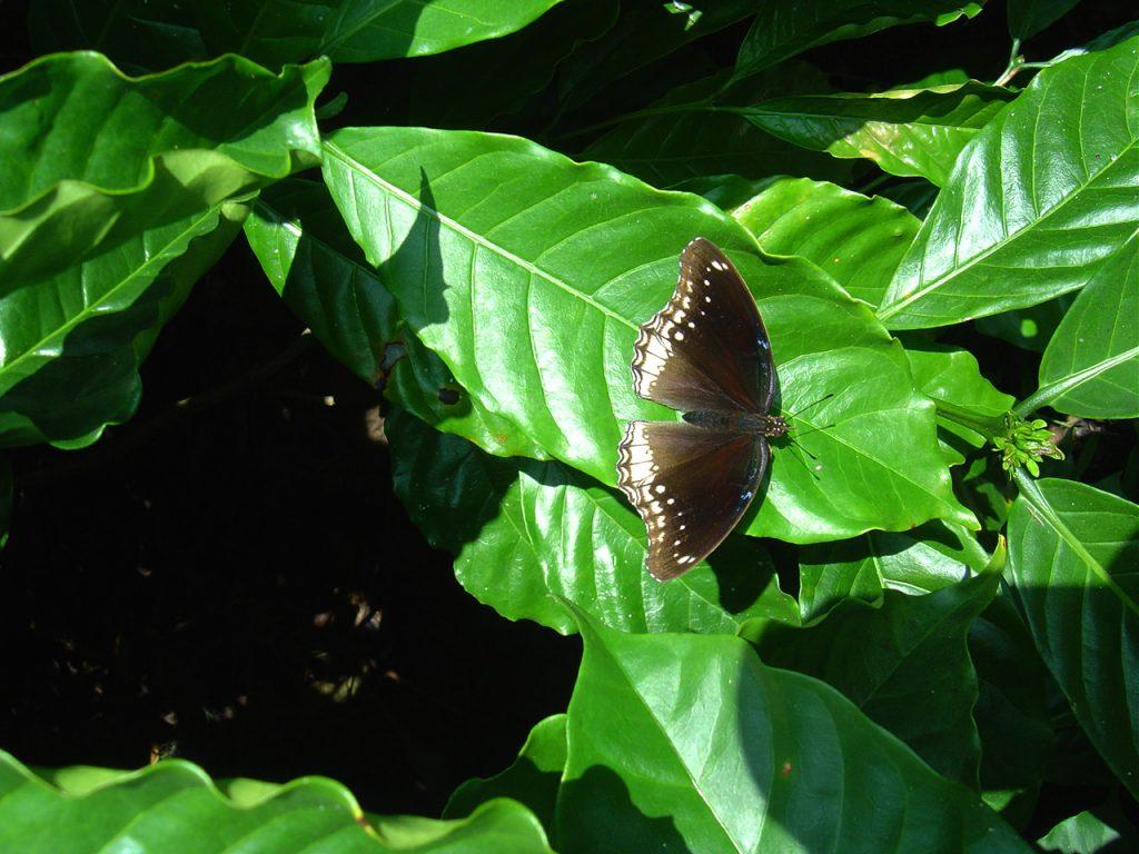 butterfly-39_3082755734_o