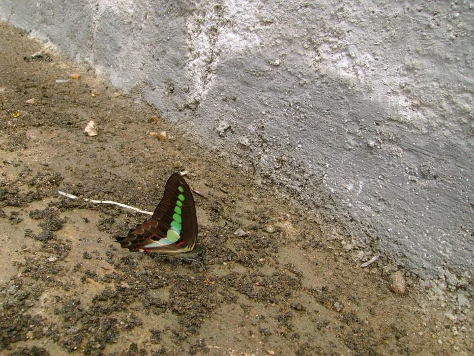 butterfly-40_3082765286_o