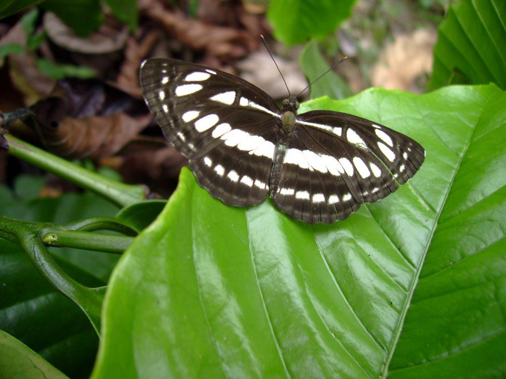 butterfly-41_3081923645_o