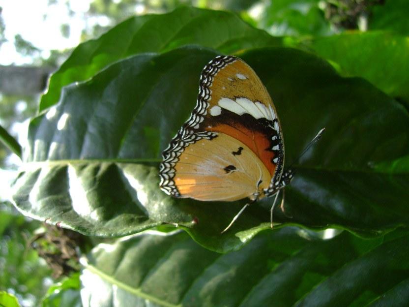 butterfly-43_3081926083_o