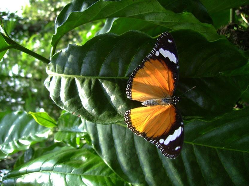 butterfly-47_3082765532_o