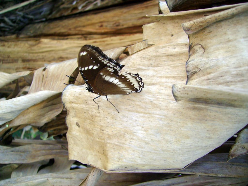 butterfly-49_3081918759_o