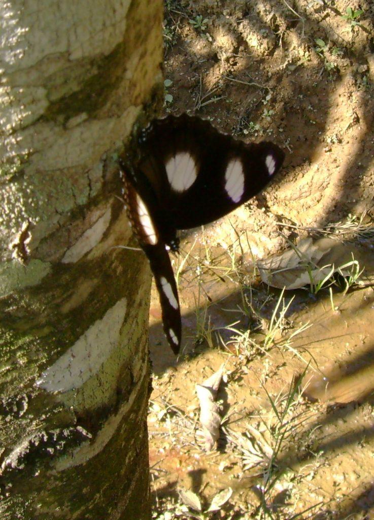 butterfly-50_3082766544_o