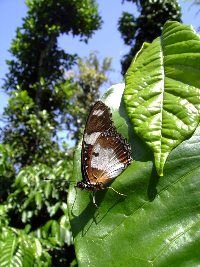 butterfly-51_3081922351_o