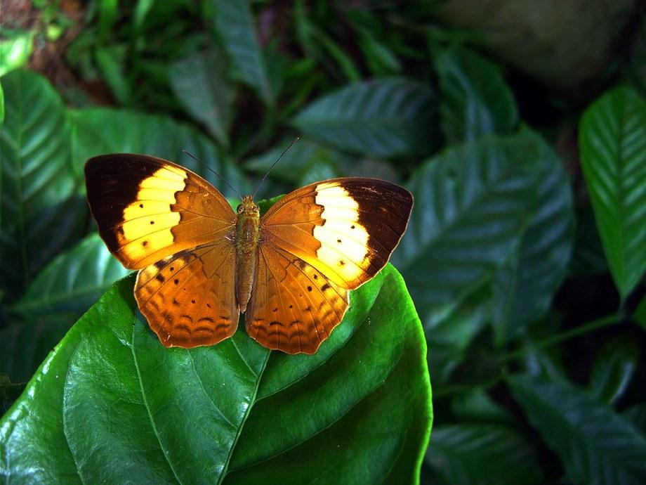 butterfly-54_3082756090_o