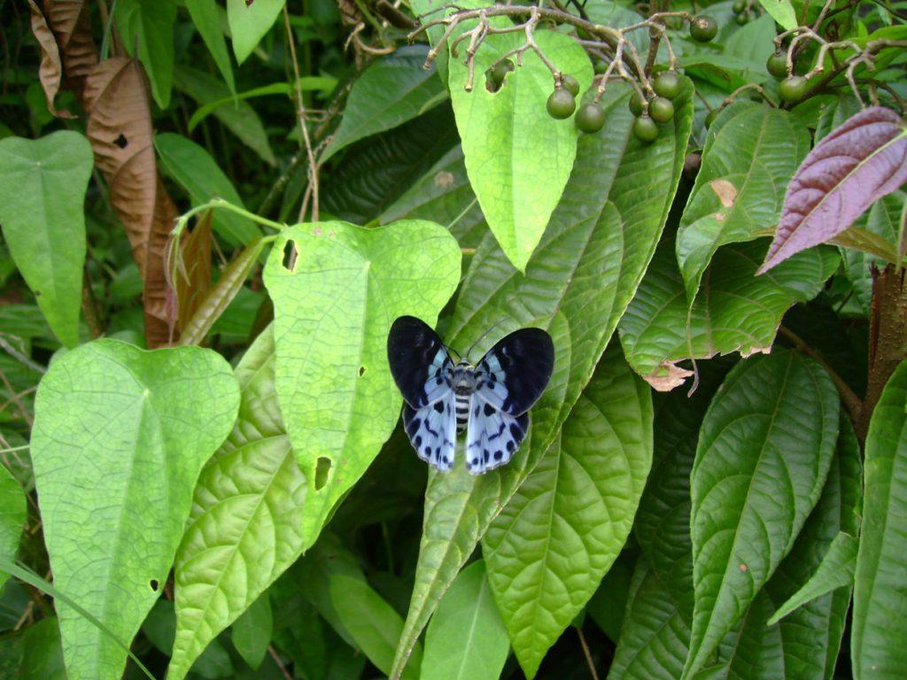 butterfly-55_3081919347_o