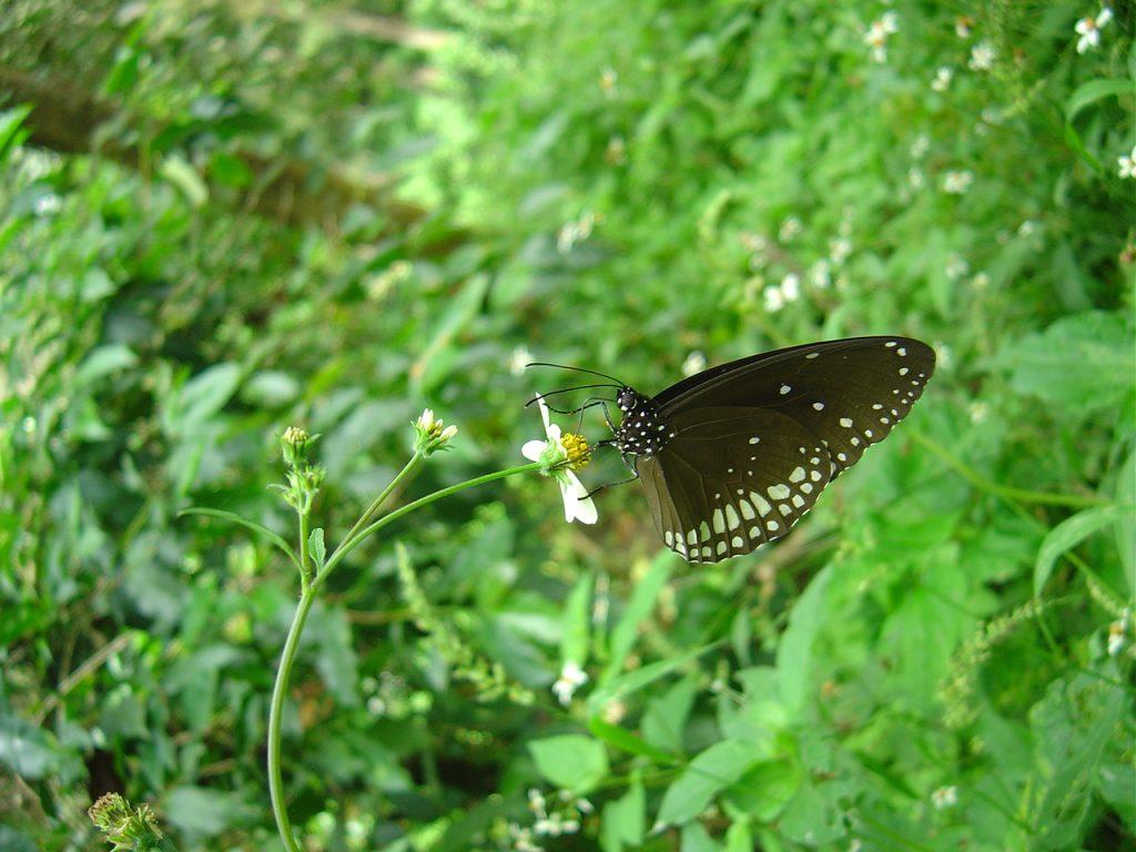 butterfly-56_3082756824_o
