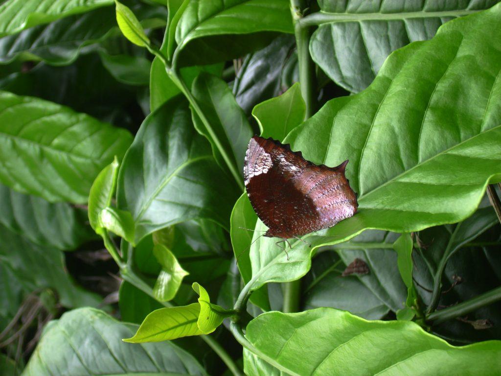 butterfly-57_3082761046_o