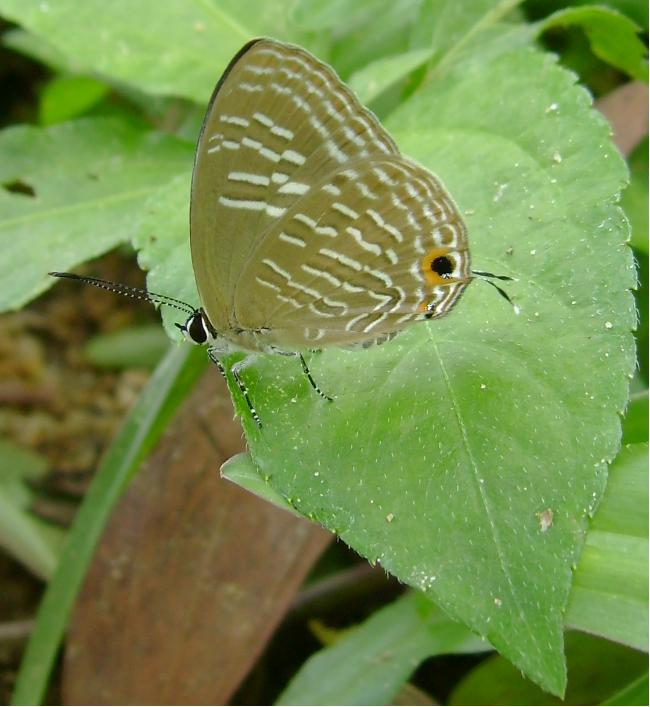 butterfly-58_3082766042_o