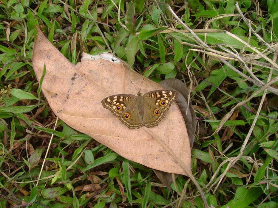 butterfly-59_3081925609_o