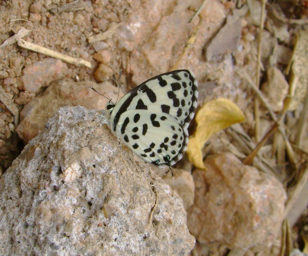 butterfly-62_3081924863_o
