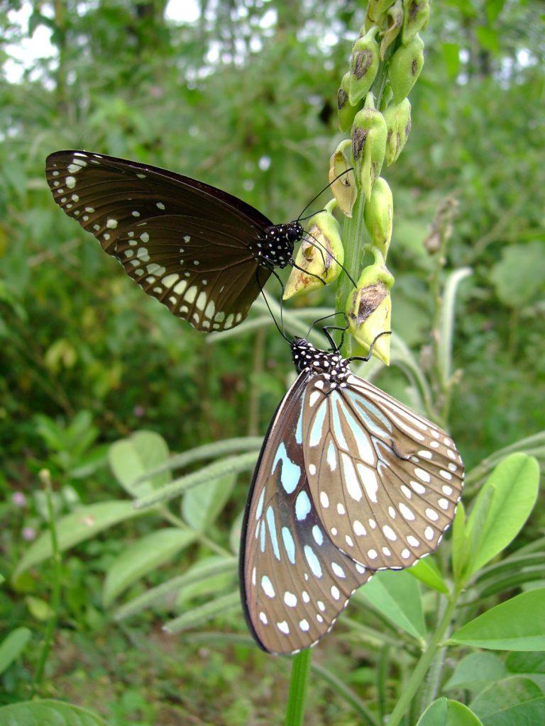 butterfly-63_3081924427_o