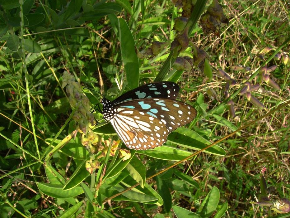 butterfly-64_3081921075_o
