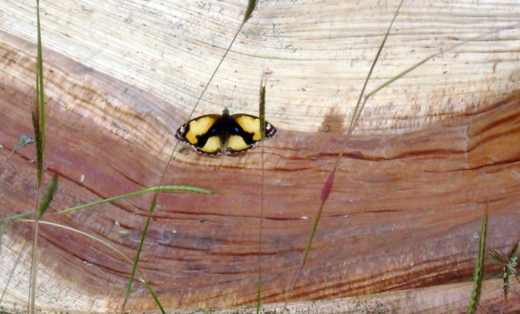 butterfly-65_3081925071_o