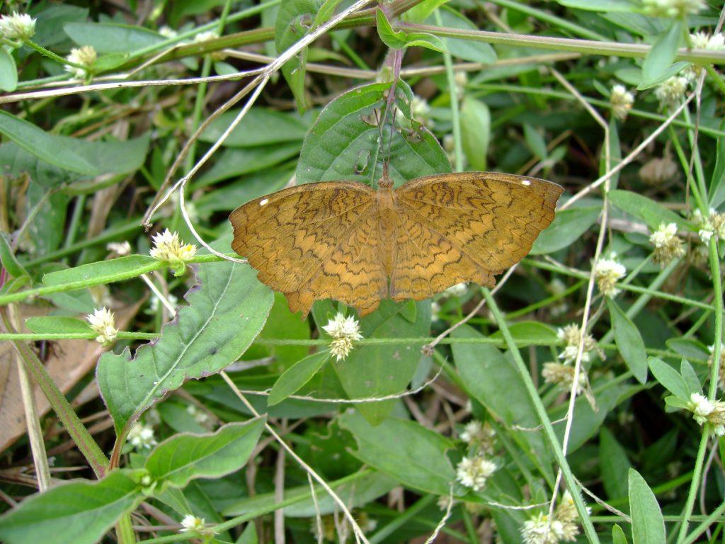 butterfly-66_3081922725_o