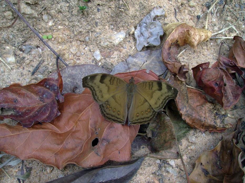 butterfly-67_3081925209_o