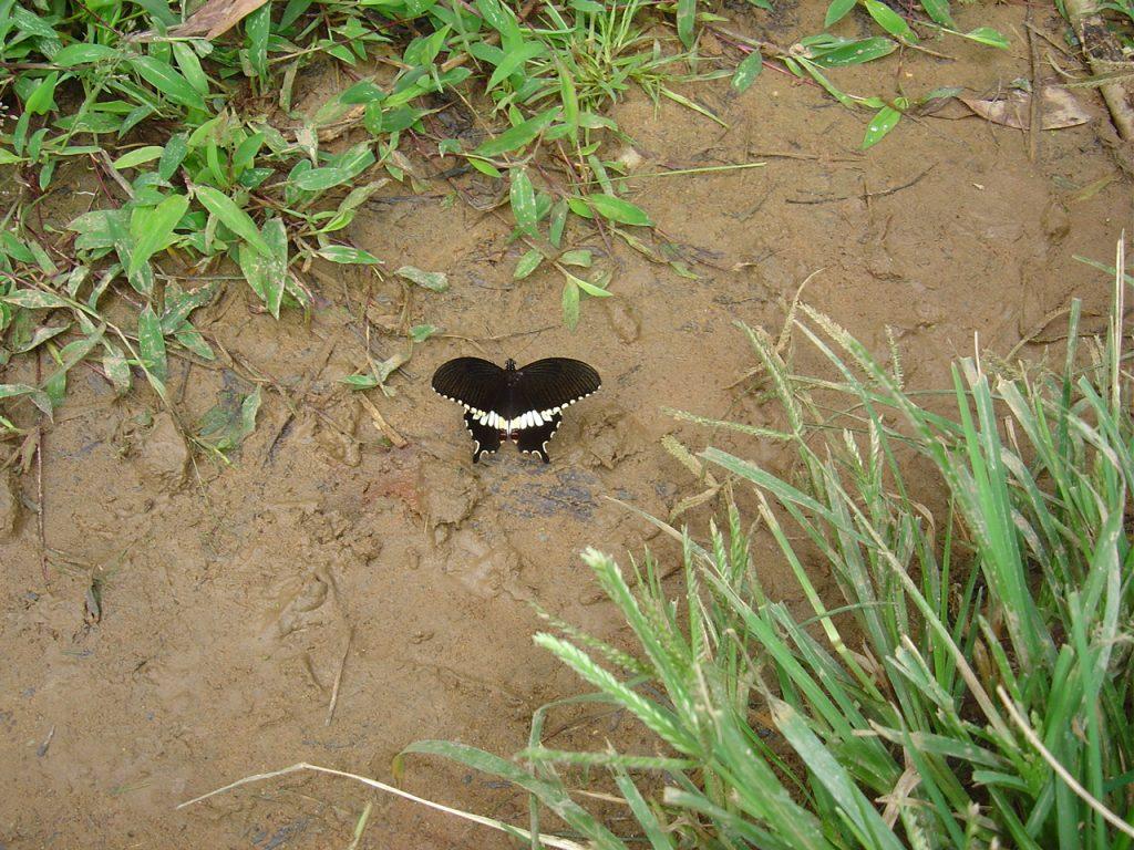 butterfly-68_3081917931_o