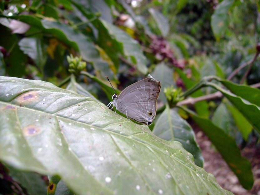 butterfly-69_3082764758_o
