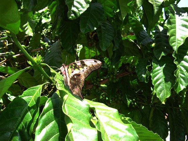 butterfly-70_3081927183_o