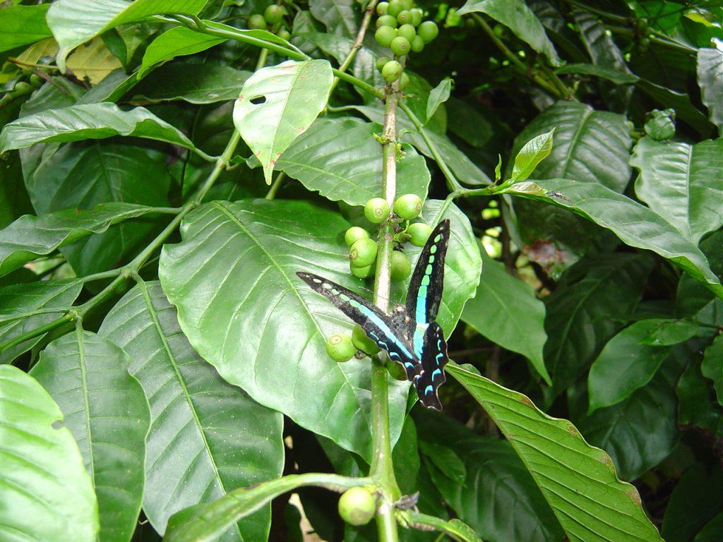 butterfly-71_3082757354_o