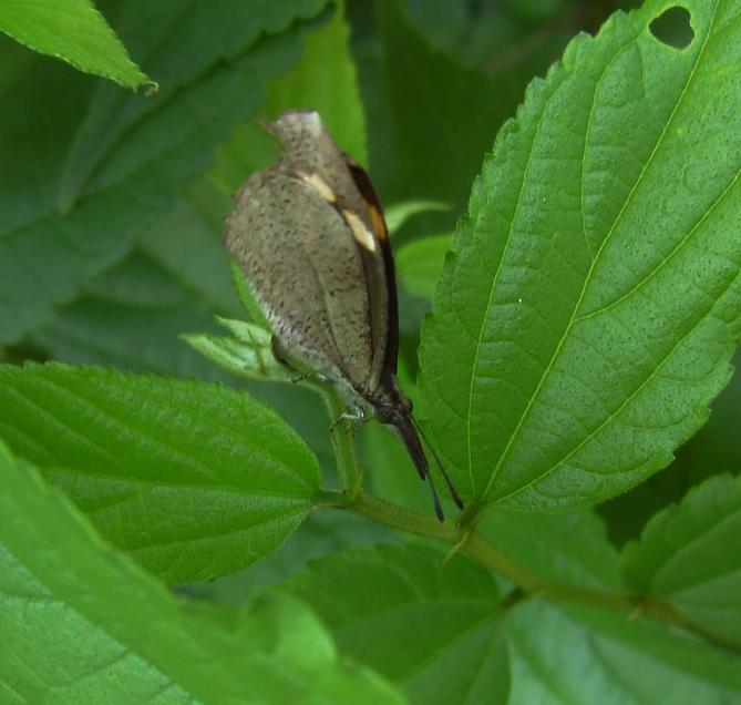 butterfly-73_3081926615_o