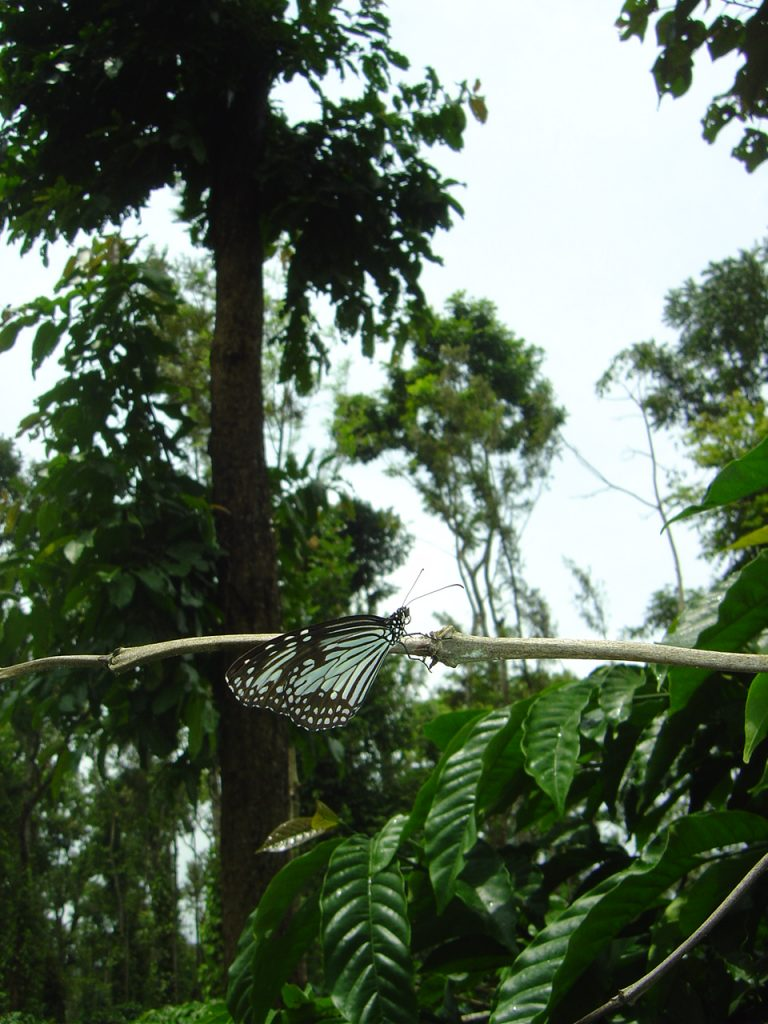 butterfly-74_3082755532_o