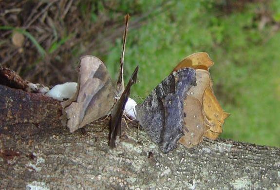 butterfly-75_3082766106_o
