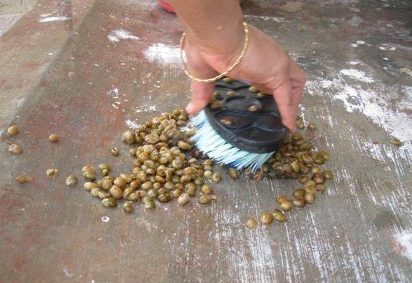 scrub-civit-beans