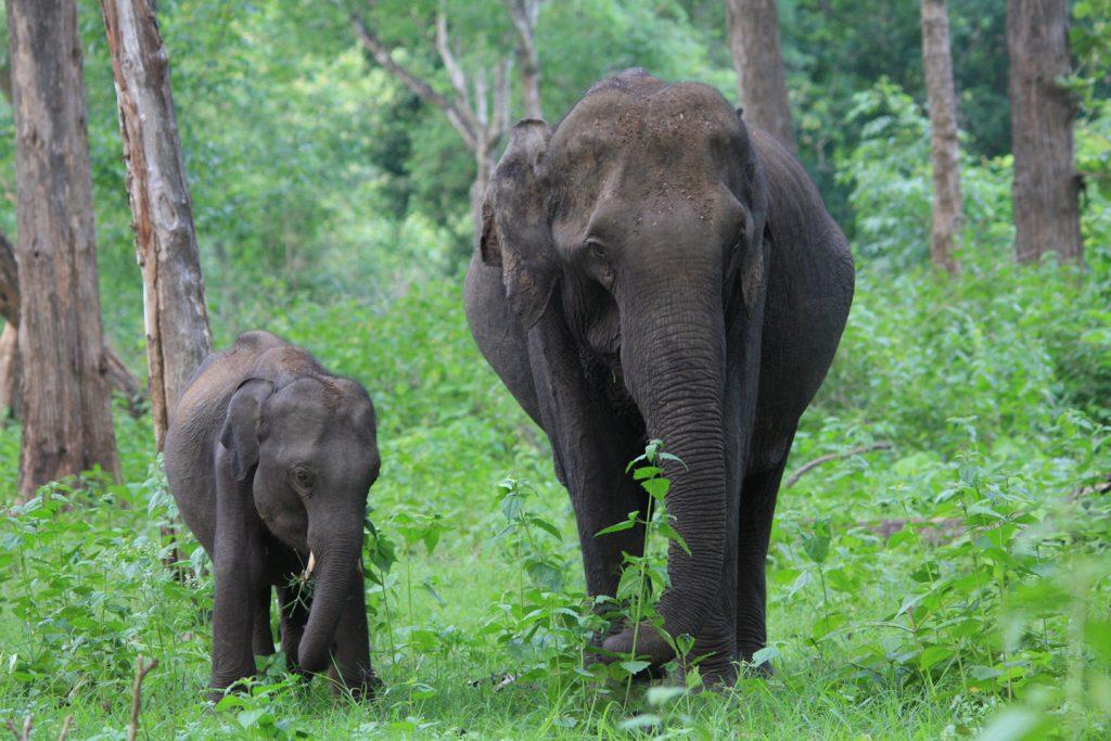 wildlife-14_6127873870_o