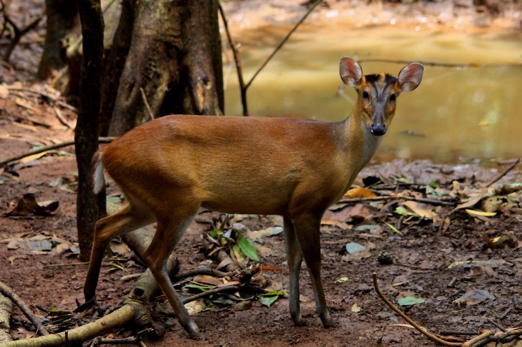 wildlife-21_6127325983_o