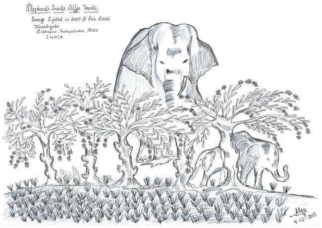 Elephant-Inside-Coffee-Forest650