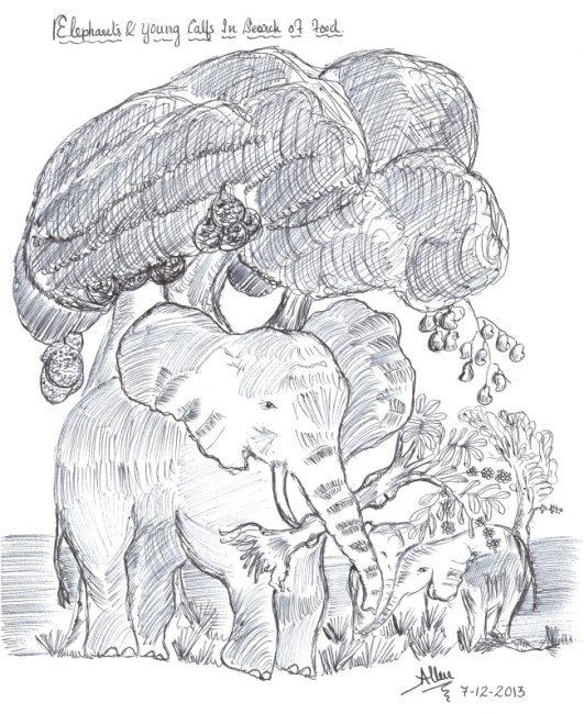 Elephants-In-Search-Of-Food650