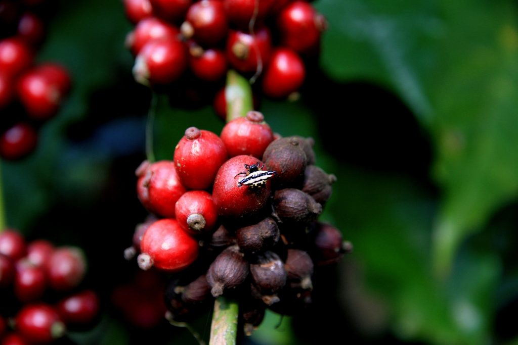 2015 slide-1 Dr.GNP. Ecofriendlycoffee (11)