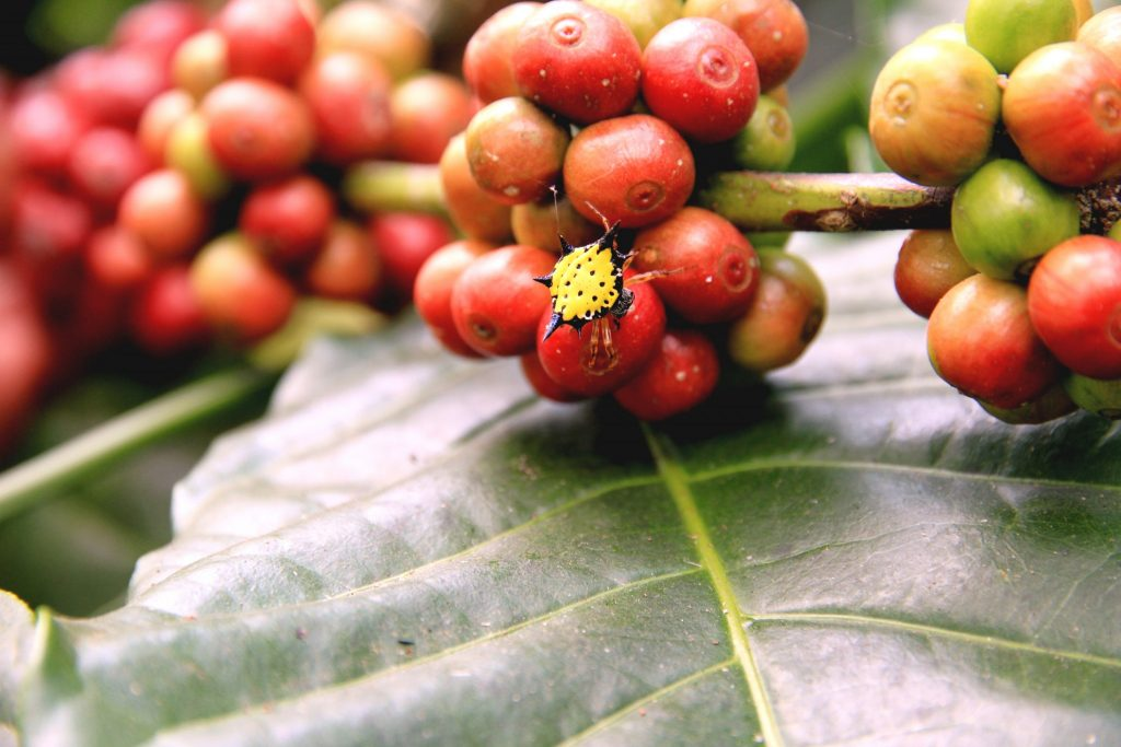 2015 slide-1 Dr.GNP. Ecofriendlycoffee (24)