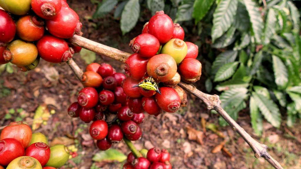 2015 slide-1 Dr.GNP. Ecofriendlycoffee (29)