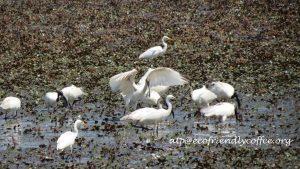 Birds Amidst Ecofriendly Indian Coffee