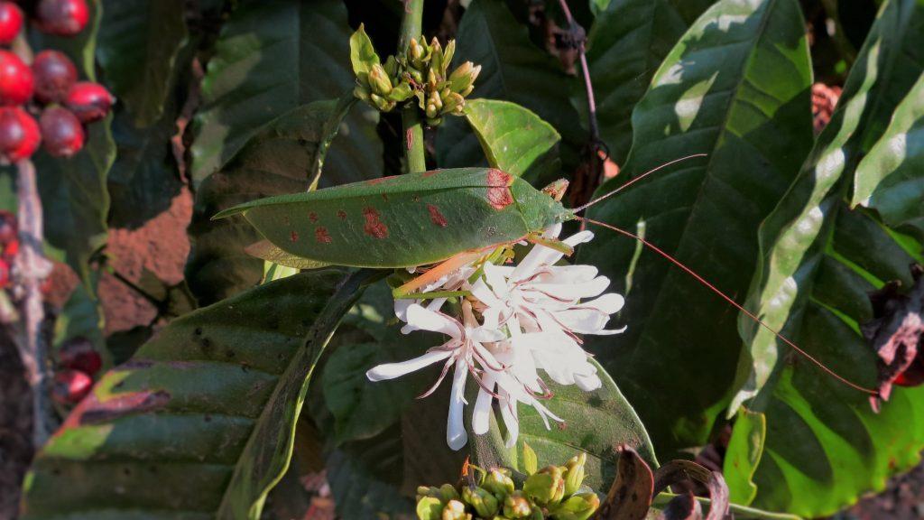 2016-other-pollinatorsslide-10