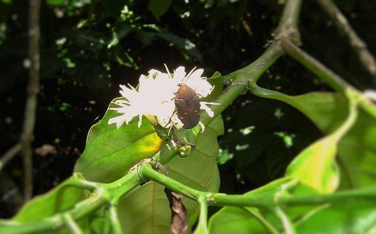 2016-other-pollinatorsslide-6a