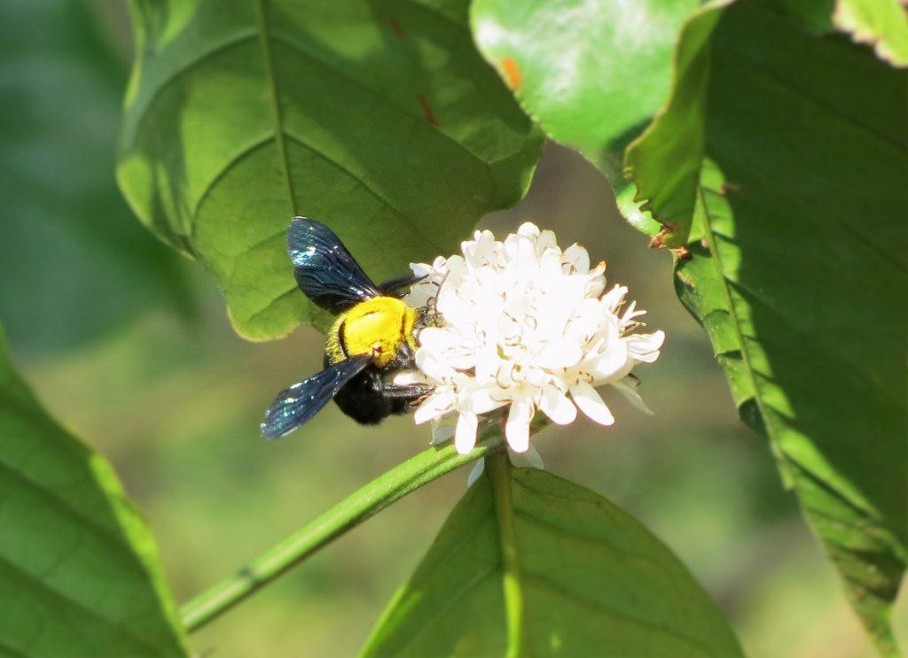 2016-other-pollinatorsslide-8a