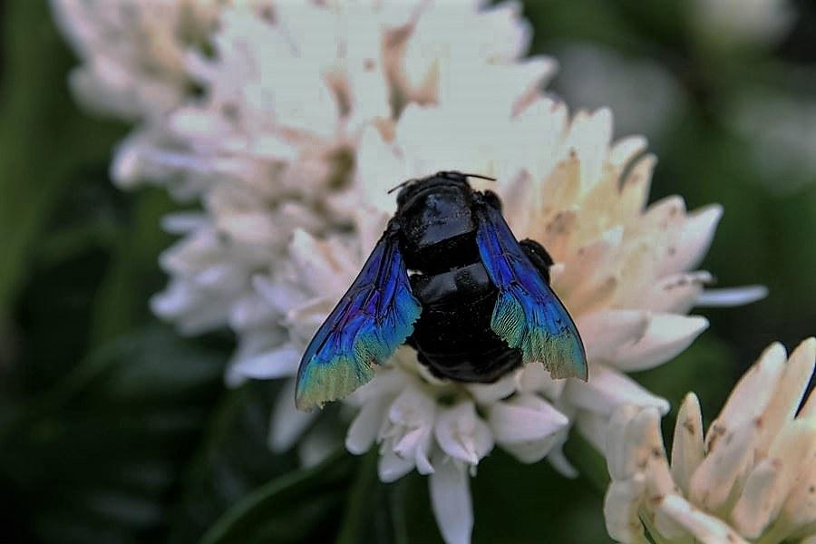 2016-other-pollinatorsslide-8b