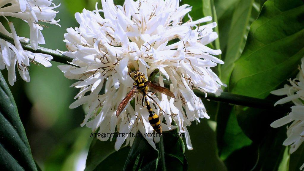 2016-other-pollinatorsslide-8c