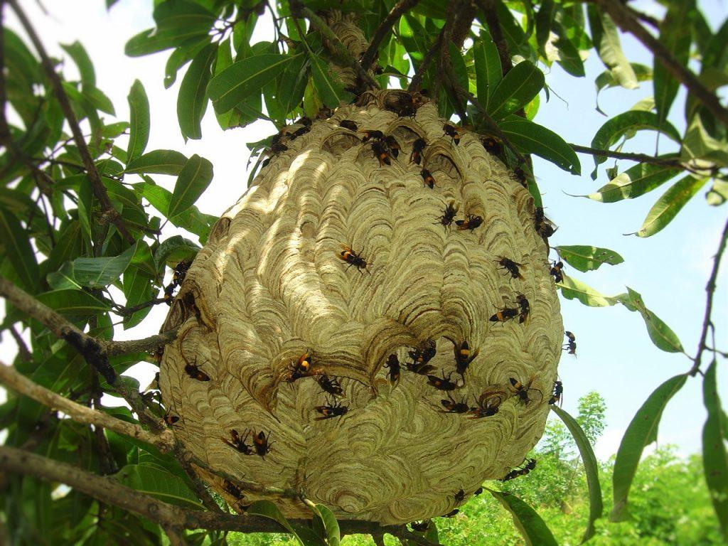 2016-other-pollinatorsslide-9